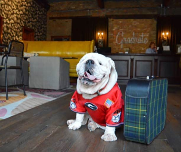 georgia university bulldog next to travel luggae