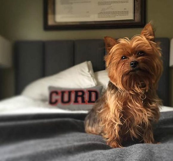 The Graduate Madison Is A Pet Friendly Hotel In Wisconsin