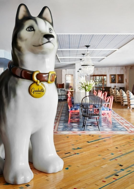 Jonathan the husky greets you in the lobby