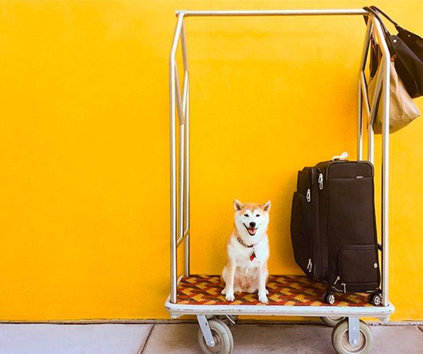 Dog on a hotel luggage cart at Graduate Tempe